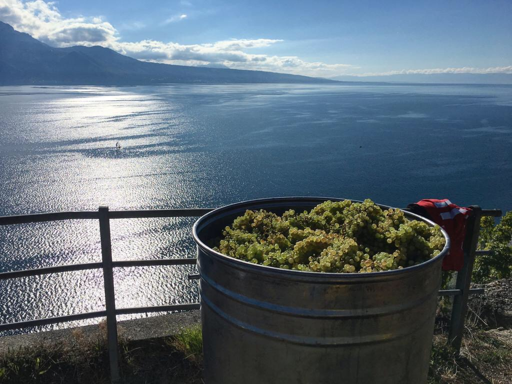 lavaux 2 swiss wine regions - Best places to visit in Switzerland