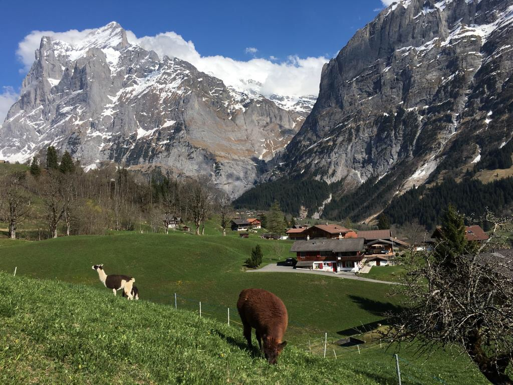 Grindelwald 1 - Best places to visit in Switzerland