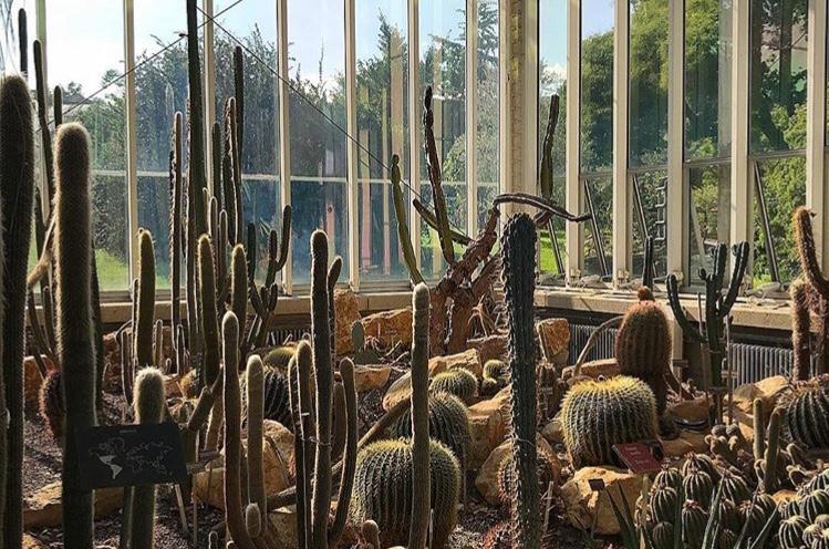 Botanical gardens - 10 best things to do in Geneva