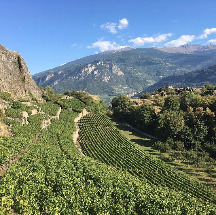 Swiss Wine regions - Valais