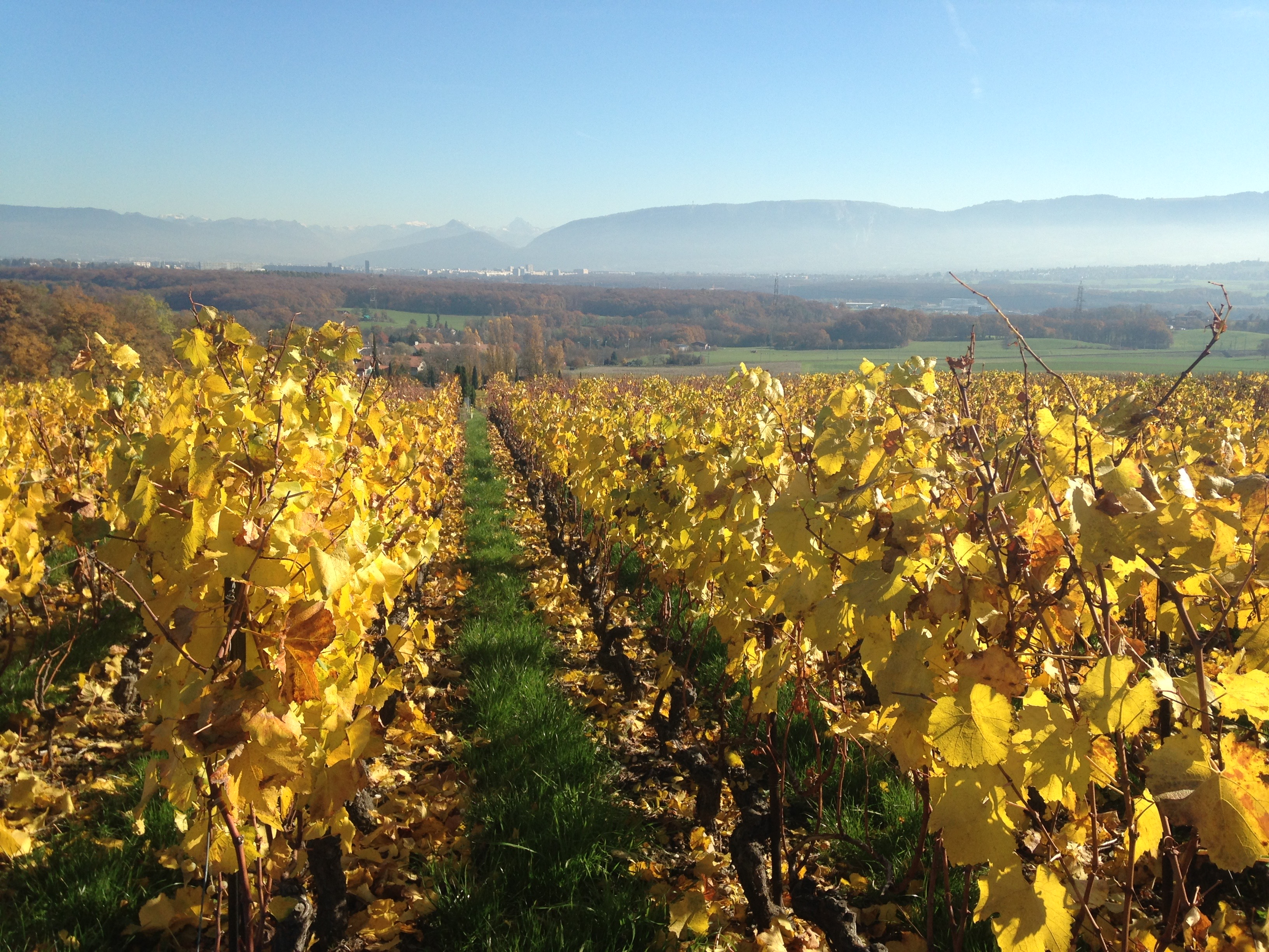 Swiss wine regions - Geneve