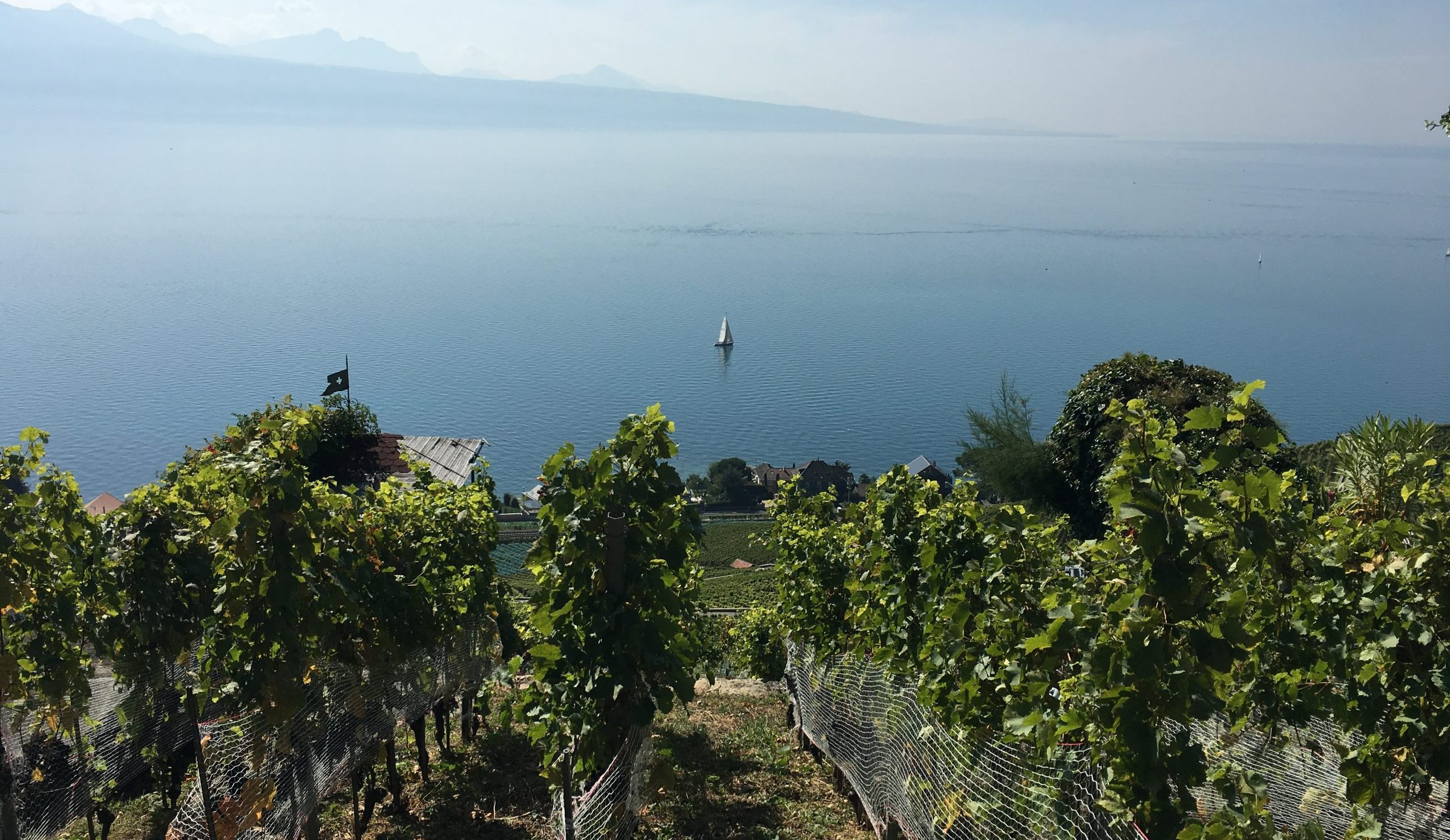Top 5 Swiss Wine Regions to Visit