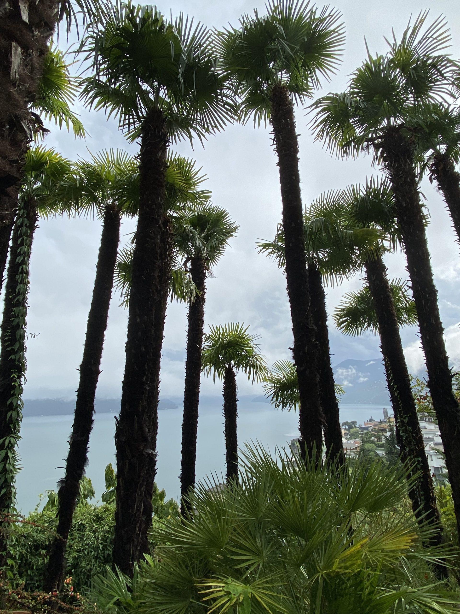 Parkhotel Brenscino botanical garden